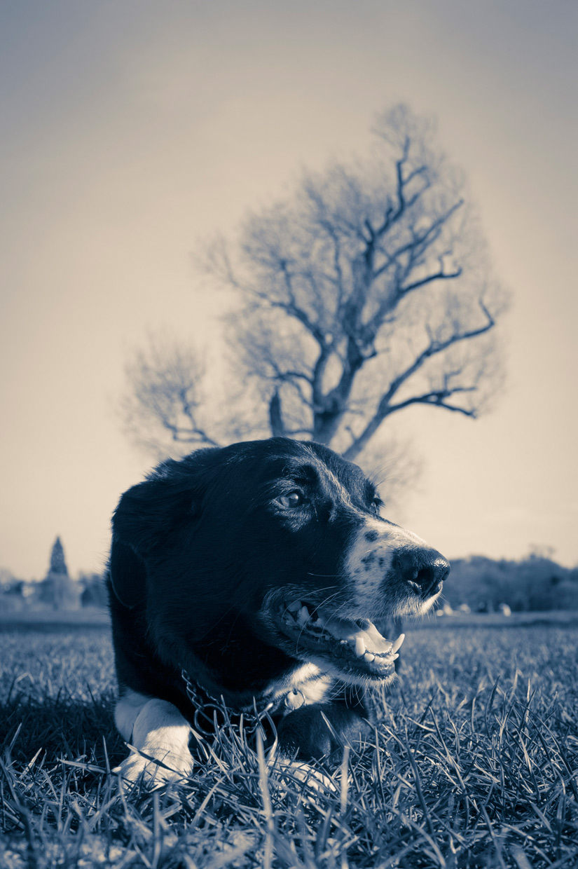 hjorthmedh-grantchester-dog