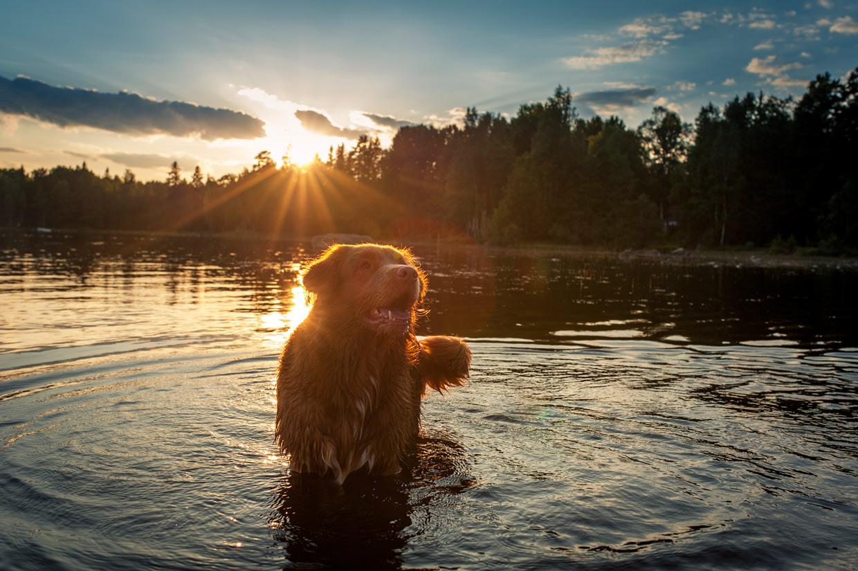 hjorthmedh-smaland-2014-sunset