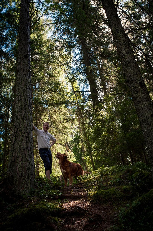 hjorthmedh-smaland-2014-woods