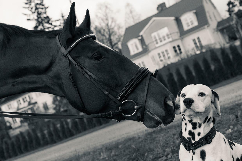 hjorthmedh-equestrian-cousin-concerned-dog