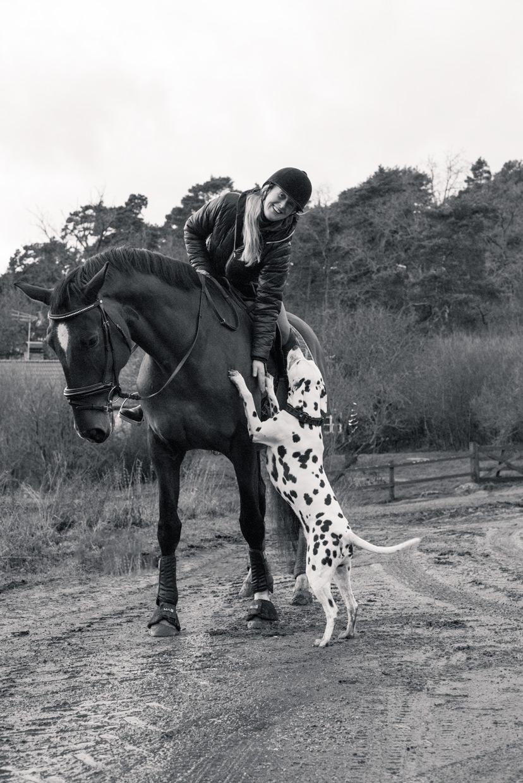 hjorthmedh-equestrian-cousin-jumping-2