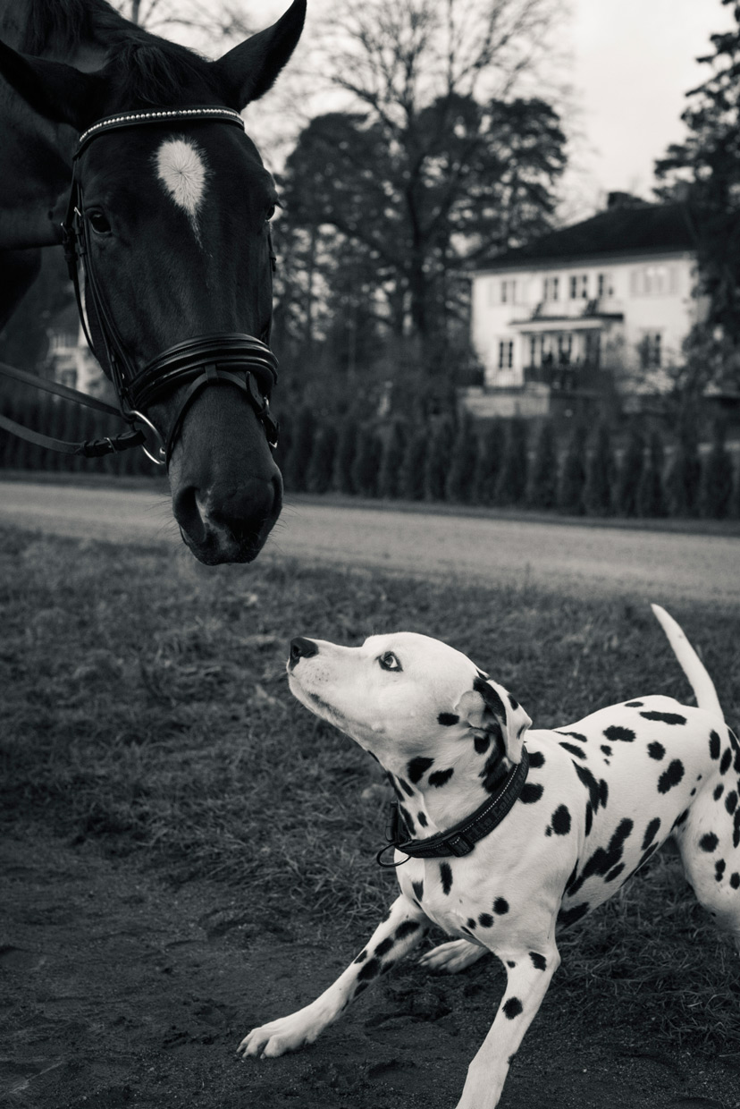 hjorthmedh-equestrian-cousin-playful-dog