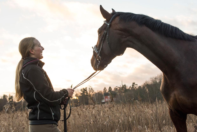 hjorthmedh-equestrian-cousin-standing-1