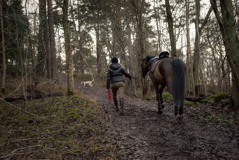 hjorthmedh-equestrian-cousin-walking