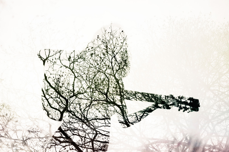 hjorthmedh-jade-cuttle-tree-3