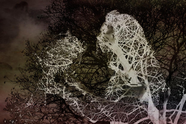 hjorthmedh-jade-cuttle-tree-inverted