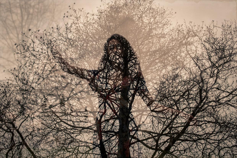 hjorthmedh-jade-cuttle-tree
