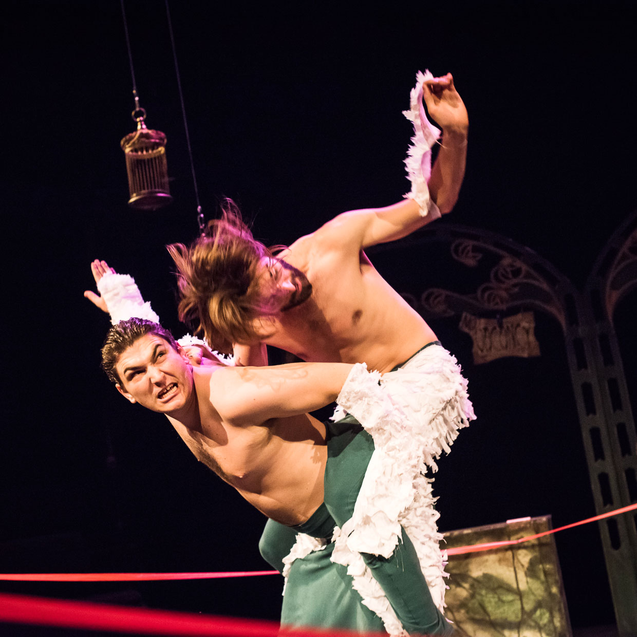 Piggyback riding, fighting, flapping wings in boxing ring.