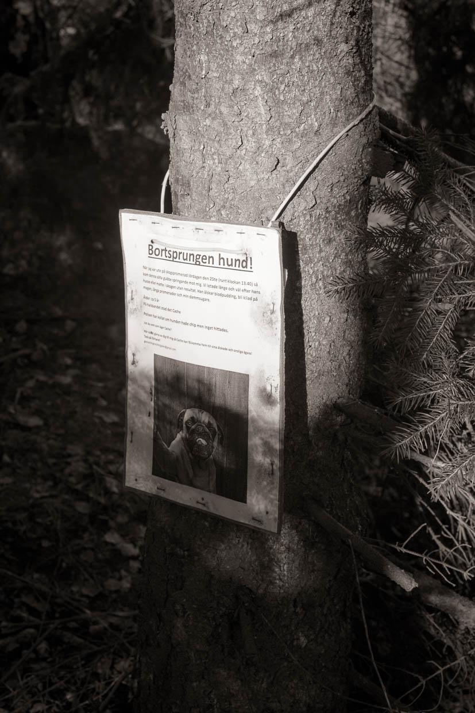 hjorthmedh-autumn-in-nasbydal-25