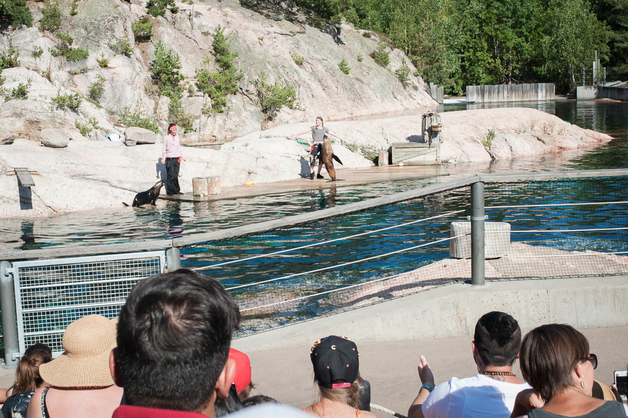 hjorthmedh-birthday-party-with-tigers-and-dolphins-105