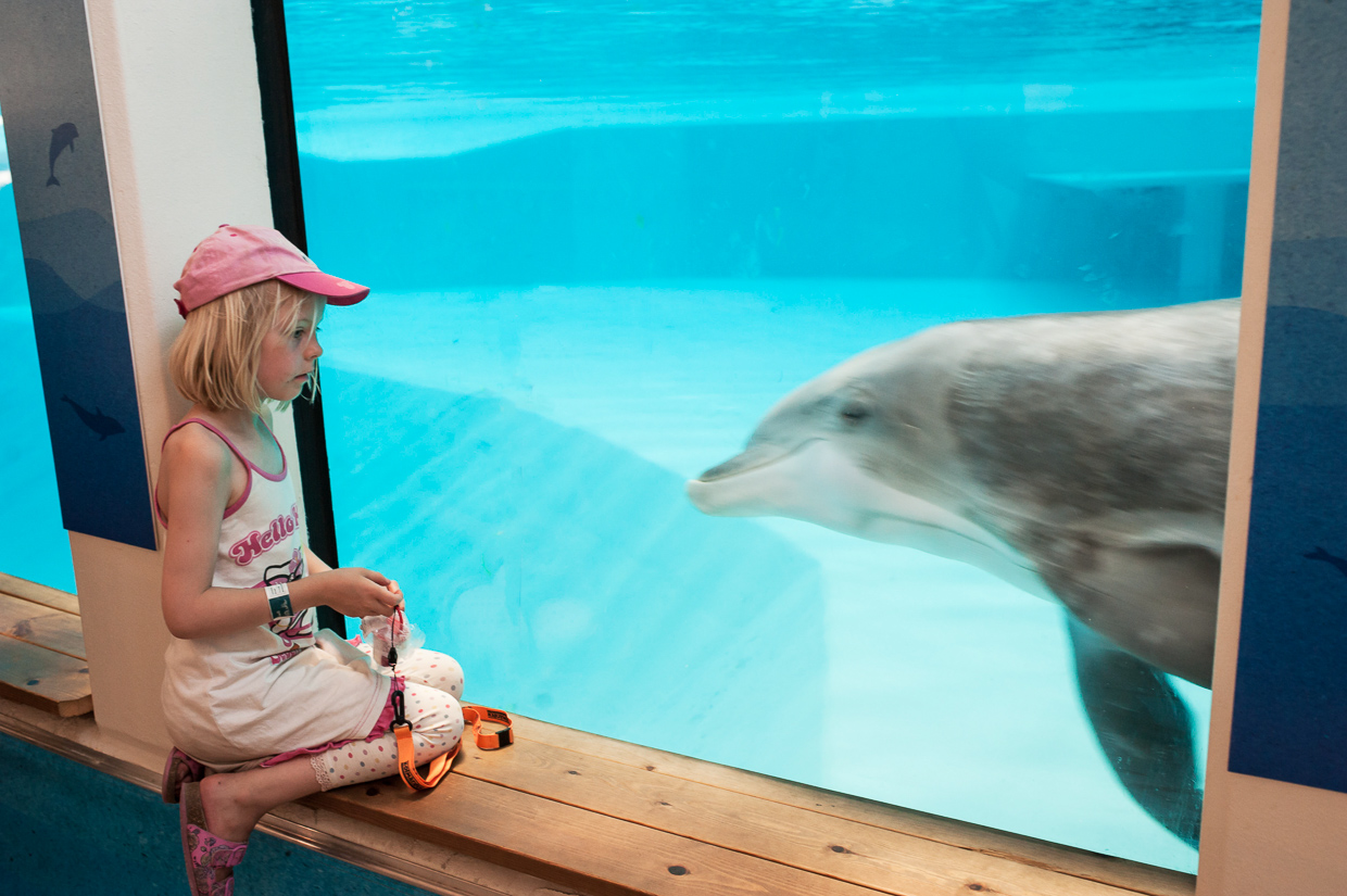 hjorthmedh-birthday-party-with-tigers-and-dolphins-31