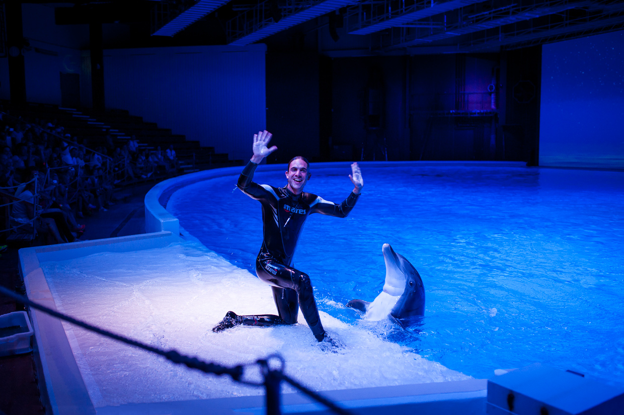 hjorthmedh-birthday-party-with-tigers-and-dolphins-38