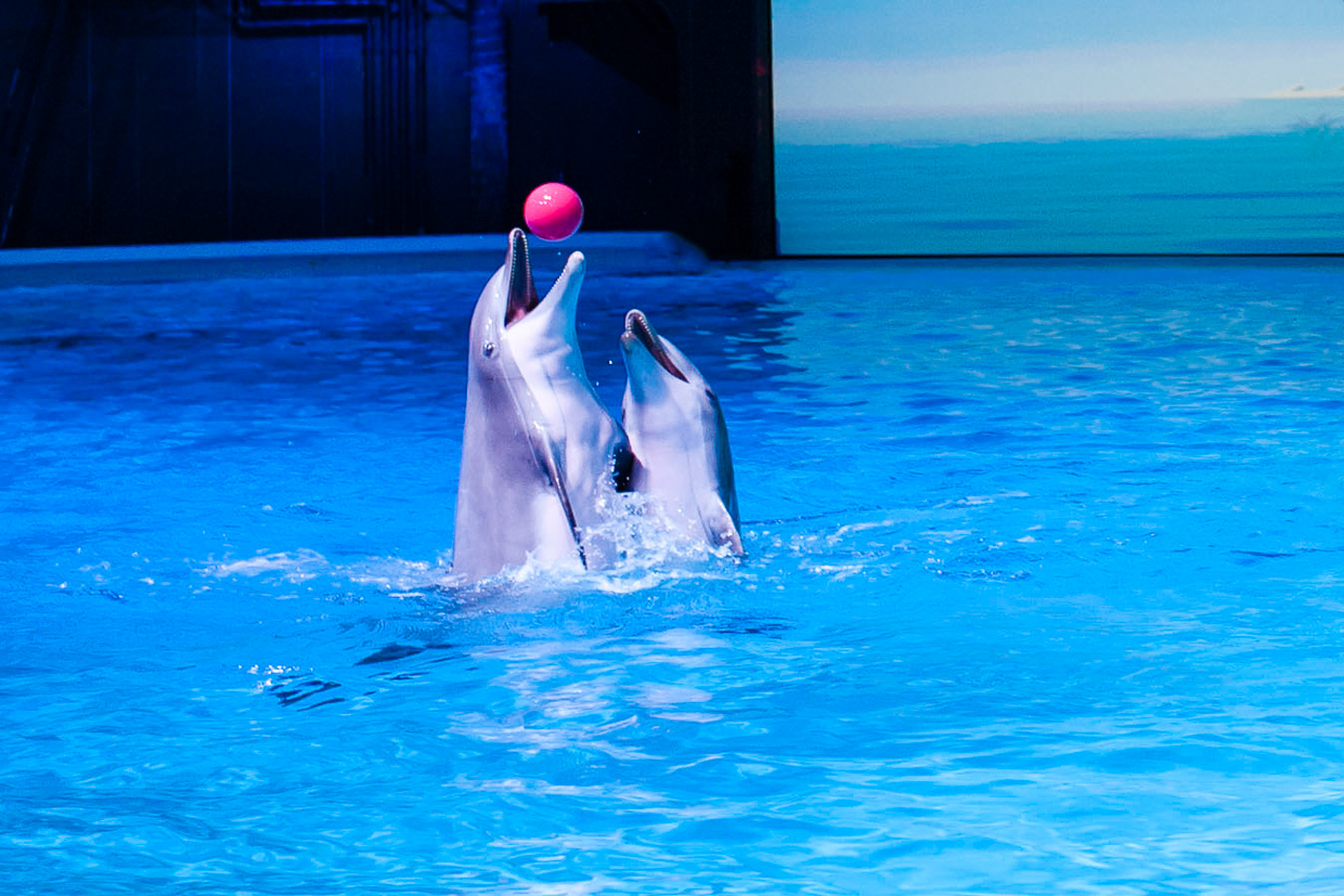 hjorthmedh-birthday-party-with-tigers-and-dolphins-40