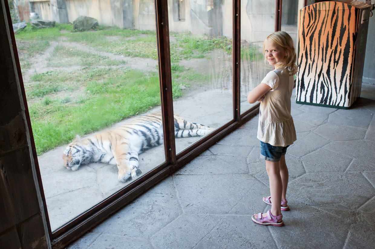 hjorthmedh-birthday-party-with-tigers-and-dolphins-71